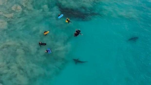 Fotgrafo australiano filma momento em que crianas so cercadas por 400 tubares (Foto: Sean Scott)