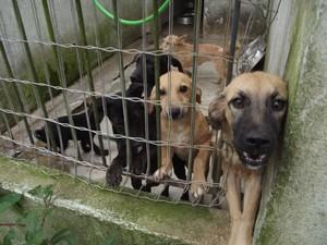 cachorro em canil cabo frio (Foto: Heitor Moreira/G1)