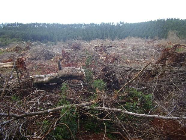 Polícia Ambiental encontrou cinco propriedades com desmatamento de Mata Atlântica, no Paraná (Foto: Divulgação/Polícia)