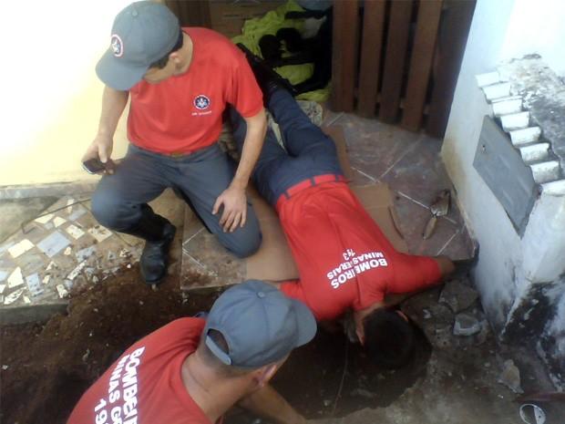 Resgate de filhotes demorou cerca de 2h (Foto: Corpo de Bombeiros)