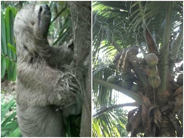 Biológia diz que animal é comum na América do Sul (Foto: Luiz Felipe Carioca/Arquivo pessoal)