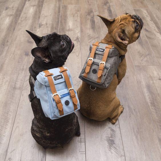 Mochilas para cachorros (Foto: Reprodução / Pinterest)