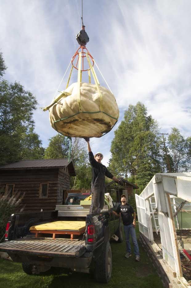 Defeito foi descoberto após guintaste levantar o alimento para fazer o transporte nos EUA (Foto: Greg Skinner/ AP)