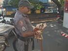 Cadela cai em córrego e é salva por bombeiros em Ribeirão Preto; veja