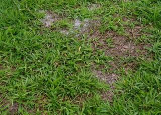 Gramado do Nhozinho Santos apresenta falhas em vários pontos (Foto: João Ricardo / GloboEsporte.com)