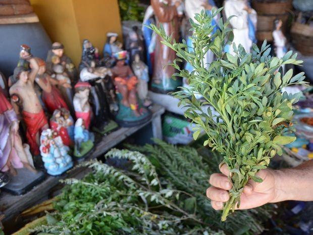 Arruda é uma das ervas utilizadas nessa sexta-feira (13) (Foto: Tasssio Andrade/G1)