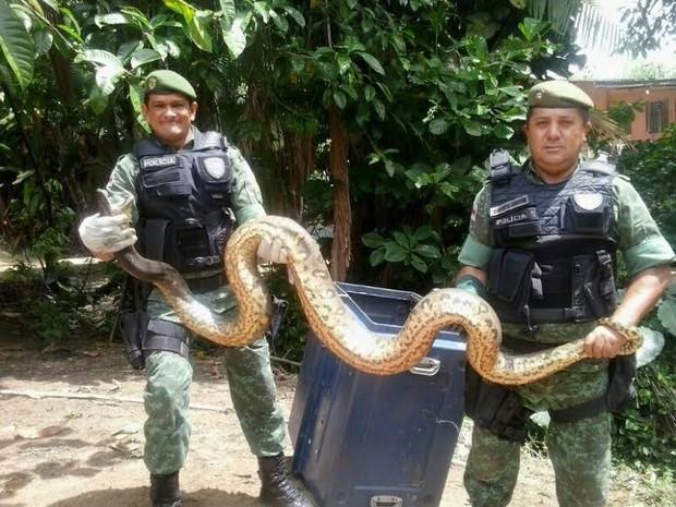 Moradores acharam a cobra e acionaram a Polícia Ambiental (Fot Batalhão Ambiental/divulgação)