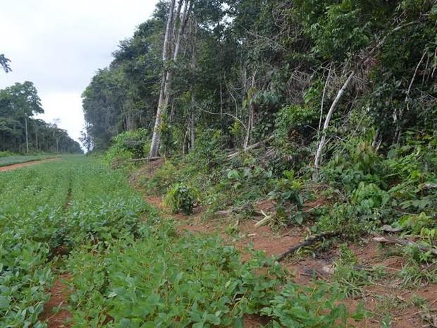Desaparecido há seis dias é encontrado morto em Vilhena, RO (Foto: Lauane Sena/G1)