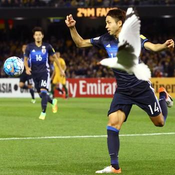 Gaivota  Yu Kobayashi Austrália x Japão (Foto: Reuters)