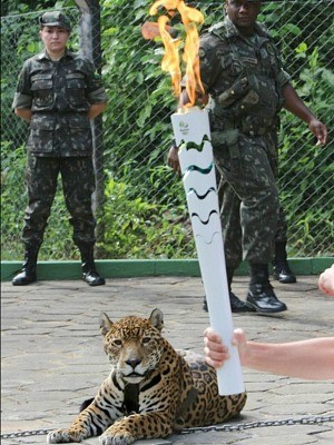 Onça Juma participou de evento da Rio 2016 em Manaus momentos antes de ser morta (Foto: Jair Araújo/Diário do Amazonas)