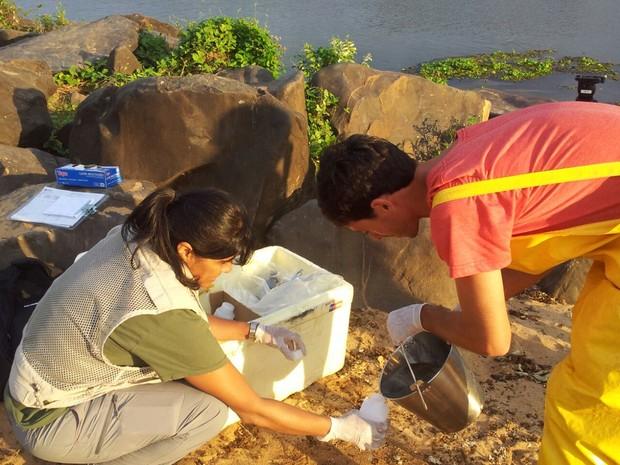 Técnicos fazem coleta da água do Rio Doce, espírito santo (Foto: Viviane Machado/ G1)