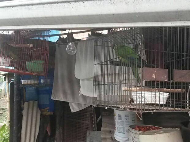 Animais foram levados para centor de triagem na capital baiana (Foto: Divulgação/ PRF)