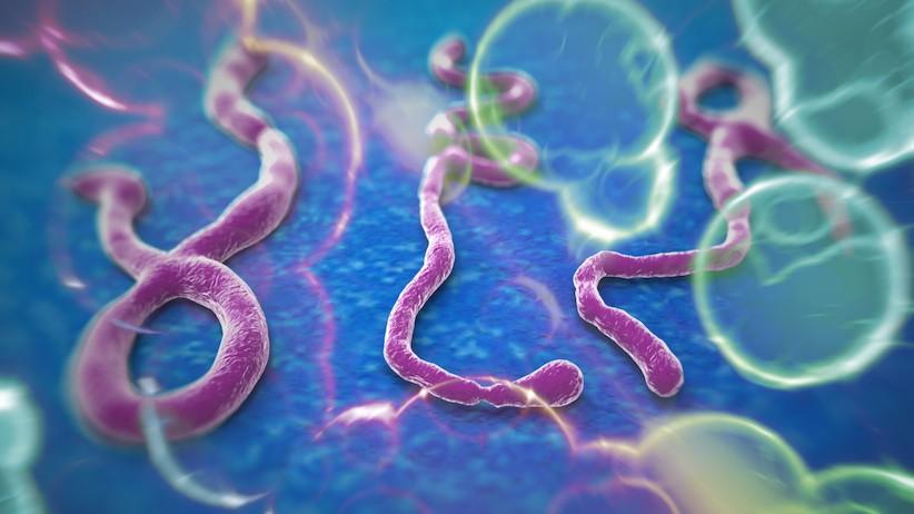 Ebola mata mais um médico na Libéria e governos temem que o surto se torne global