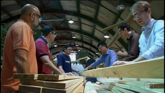 Projeto da Unesp de Itapeva cria software que faz 'raio X' da madeira