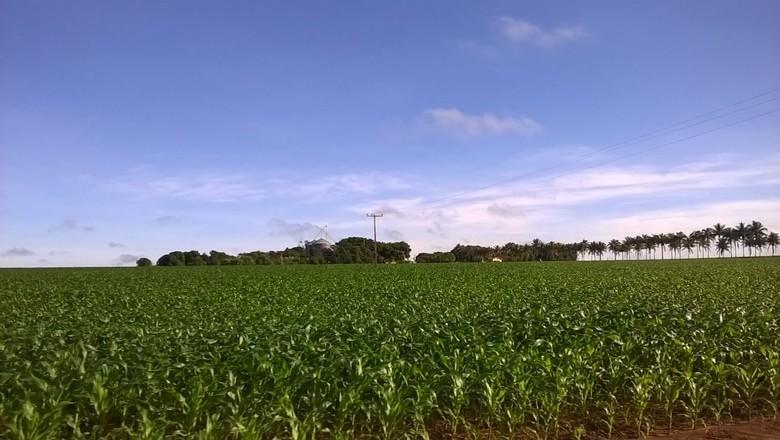 agricultura_milho_refugio (Foto: Divulgação/Aprosoja-MT)