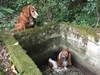 Cadela é homenageada ao vigiar amiga canina em buraco nos EUA