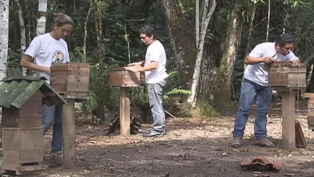 Associação trabalha com 14 espécies de abelhas, cinco delas já produzem mel.  (Foto: Reprodução/RPC TV)