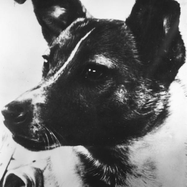 Detalhe da foto da cadelinha Laika, primeiro animal a ser lançado em uma cápsula espacial em 1957 no programa de conquista do espaço da Rússia (Foto: Keystone/Getty Images)