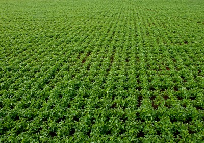 agricultura_soja_plantio_cruzado (Foto: José Medeiros/Ed.Globo)