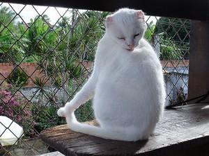 Gato (Foto: Ruan Melo/G1)