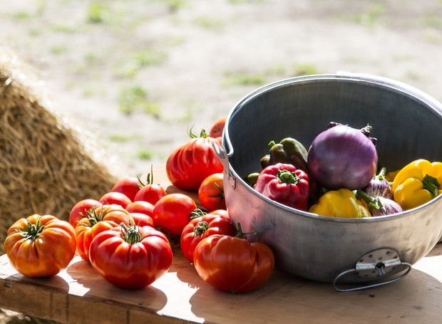 isla-sementes-super-colheita-evento-viamao-fazenda-horta-tomates-pimentões.jpg (Foto: Diego Larré - Estúdio Defoto/Divulgação)