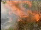 Tocantins está entre os primeiros no ranking de queimadas no país