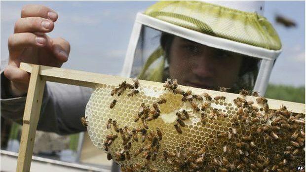 Polinização feita pelas abelhas pode acabar em 3 gerações (de humanos)  (Foto: AP)