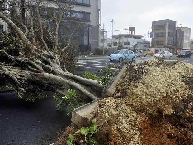 Ventos do tufão 'Jelawat' já andam derrubando árvores e provocando estragos em Okinawa. (Foto: Kyodo News / via AP Photo)