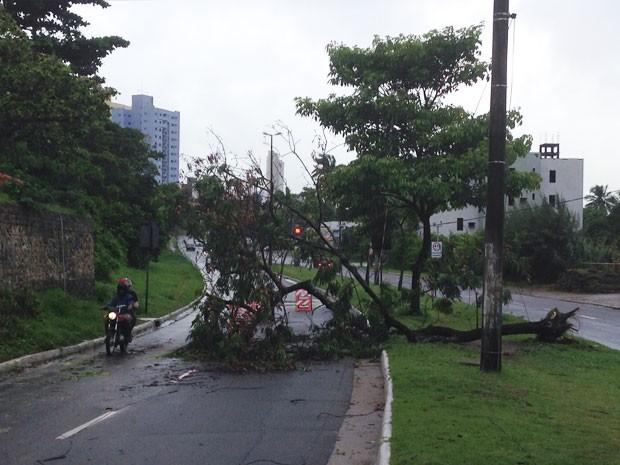 Queda de árvore na Bera Rio deixou o trânsito lento (Foto: Walter Paparazzo/G1)