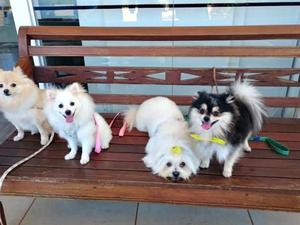 Dia de passeio dos cães após banho (Foto: Graziela Rezende/G1 MS)