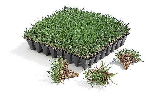 O plug é uma opção mais econômica que o tapete de grama, porém apresenta crescimento mais lento (Foto: Evelyn Müller)