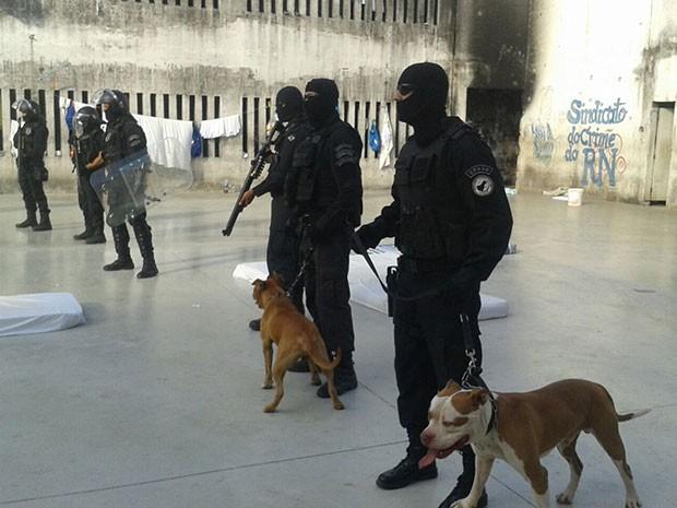 Cães foram usados em revista na Penitenciária Estadual de Parnamirim (Foto: G1/RN)