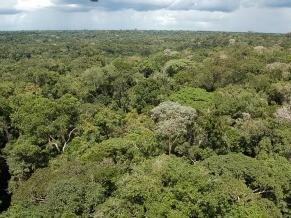 Amazônia (Foto: Divulgação/Tabajara Moreno/INPA)