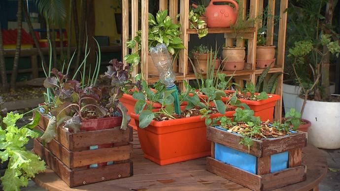 Mini-horta pode ser feita com caixotes de madeira e lona plástica (Foto: TV Bahia)