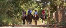 Animais são preparados para cavalgar (Reprodução/ TV TEM)
