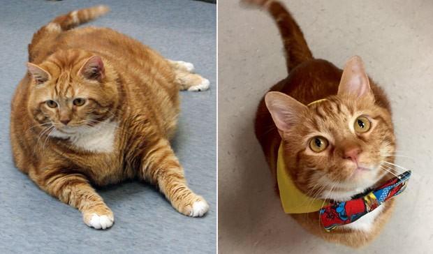 Gato perdeu dez quilos após passar por uma dieta especial e sessão de exercícios (Foto: Jana Hipp/HEAL Veterinary Hospital & Pet Rehabilitation/AP)