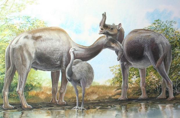 """Ilustração mostra como seria o mamífero macrauquênia, que lembra um camelo sem concorva com tromba de elefante (Foto:  Ilustração de Peter Schouten para livro """"Biggest, Fiercest, Strangest"""")"""