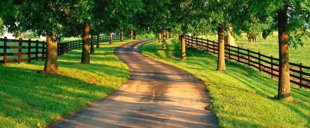 Meio rural pode ser uma alternativa ao estresse urbano. (Foto: Colégio Qi)