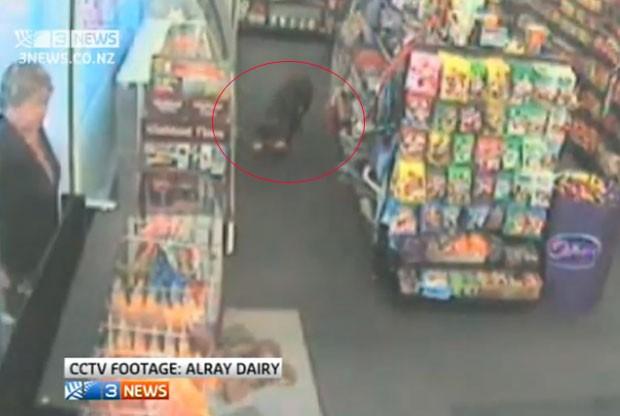 Cão com três patas foi filmado roubando comida canina (Foto: Reprodução)