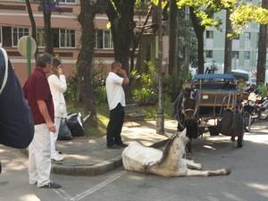 Cavalo foi apreendido e atualmente vive em um lar temporário em Secretário, no 5º distrito de Petrópolis (Foto: Arquivo Tribuna de Petrópolis)