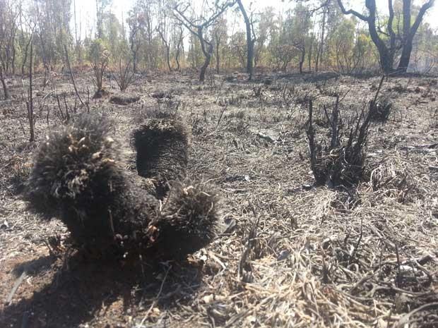 Vegetação queimada em área próxima à Estrutural, uma das vias de maior movimentação no DF (Foto: Raquel Morais/G1)