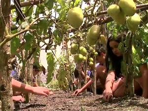 Projeto de cultivo horta por crianças em AL (Foto: Reprodução/TV Gazeta)
