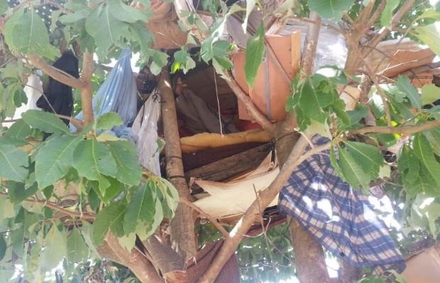 Grávida e marido que moravam em árvore são resgatados em Goiânia, Goiás 2 (Foto: Divulgação/Semas)