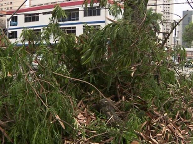 Defesa Civil atendeu várias ocorrências de árvores caída em Curitiba (Foto: Reprodução/RPC)