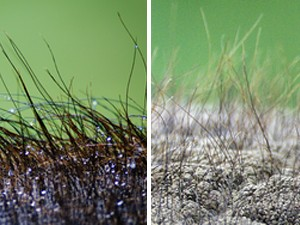 """Pelos nas costas de elefante asiático (à esquerda) e na cabeça de elefante africano (à direita) (Foto: Reprodução/""""PLoS One"""")"""
