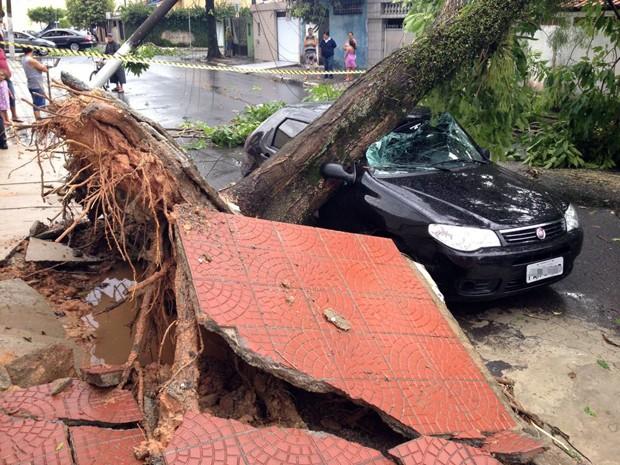 Algumas árvores caíram e atingiram carros no litoral de SP durante fortes chuvas (Foto: Luis Paes/G1)