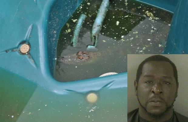 Aligátor era mantido em uma banheira de hidromassagem (Foto: Indian River County Sheriff's)