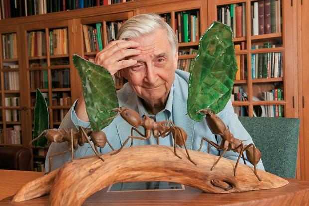 VIDA ENTRE OS INSETOS O biólogo Edward Wilson em seu escritório na Universidade Harvard. Sumidade no estudo das formigas, usa o que aprendeu com os insetos para explicar o ser humano (Foto: Rick Friedman/Corbis)