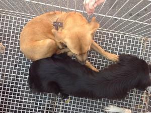 Cães para adoção na 2ª Caminhada do Amicão, em Volta Redonda (Foto: Paola Fajonni/G1)