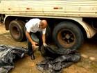 Focos do Aedes aegypti podem circular pelas estradas em caminhões